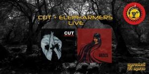 cut-elepharmers-live-at-sidro-club-free_324296